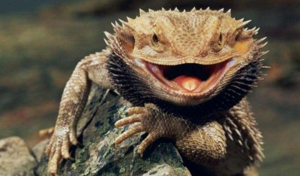 Биологи рассказали, что снится ящерицам