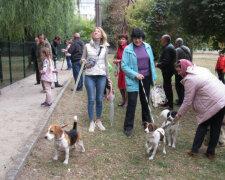 Прогулка с собаками, фото: То є Львів