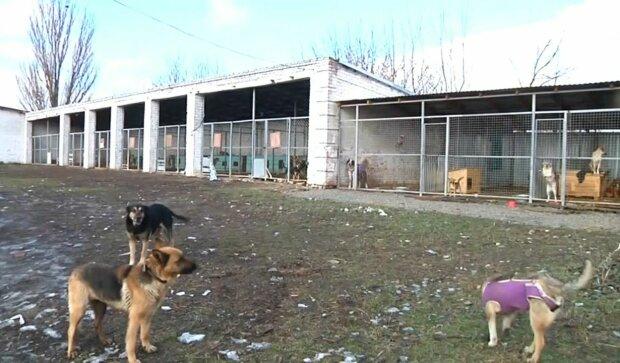 У Львові у безпритульних собак з'явиться шикарний дім - мрія кожного песика