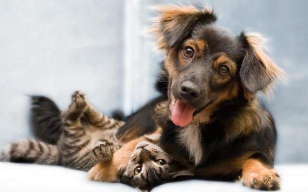 Врятувати планету: котів і собак потрібно зробити веганами
