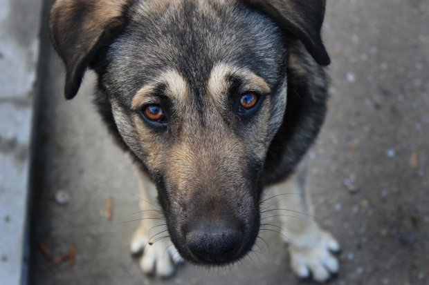 На Волині масово потруїли собак: нещасні тварини билися в конвульсіях посеред вулиці