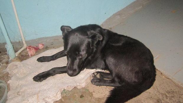 Нелюд-шкуродер ледь не забив до смерті власного пса: шокуюче відео