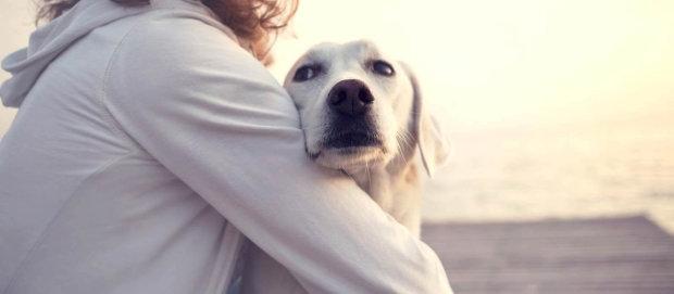 Никакой благодарности: пес спас тонущего кота и чуть не поплатился жизнью