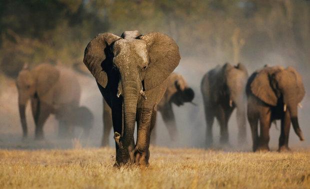 Ученые назвали животных, которые исчезнут навсегда: наши дети увидят их только на картинке