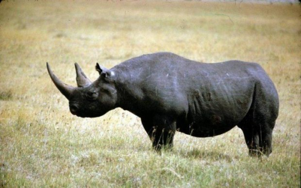 Больше не встретить: эти животные исчезли с лица Земли в 2017-м