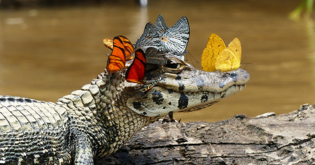 Українці розводять крокодилів: хом'ячки вже не актуальні