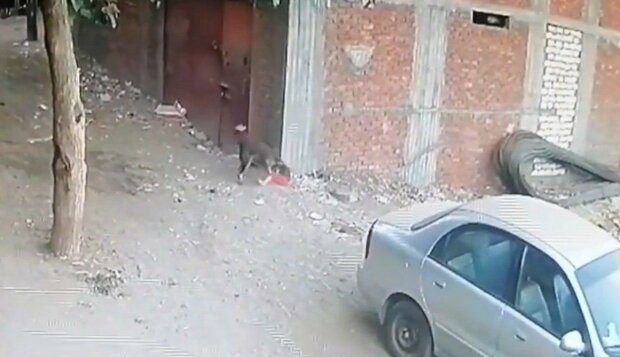 кошка спасла ребенка, скриншот с видео