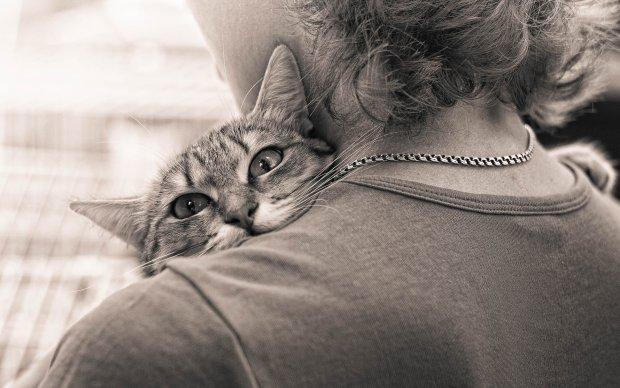 Искали друг-друга 5 лет: тощего и обессиленного кота принесли в приют, хозяйка до сих пор не верит своему счастью