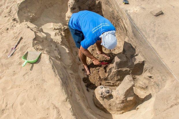 Под землей нашли уникальных животных ледникового периода: фото