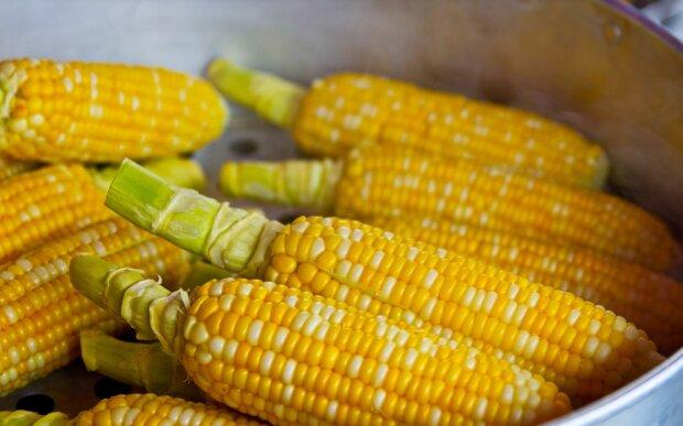 Кукуруза, фото: pixabay.com