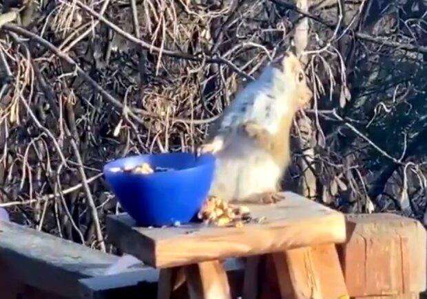 Білка наклюкалася на камеру і зловила кайф: навіть горіхами не закусила