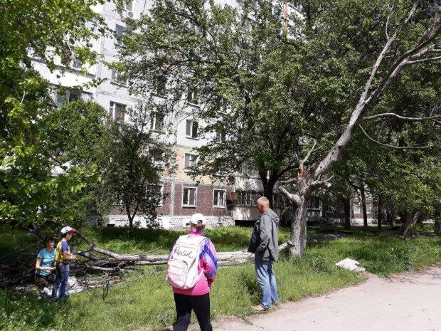 """У Києві на жінку """"напало"""" дерево: медики такого ще не бачили"""