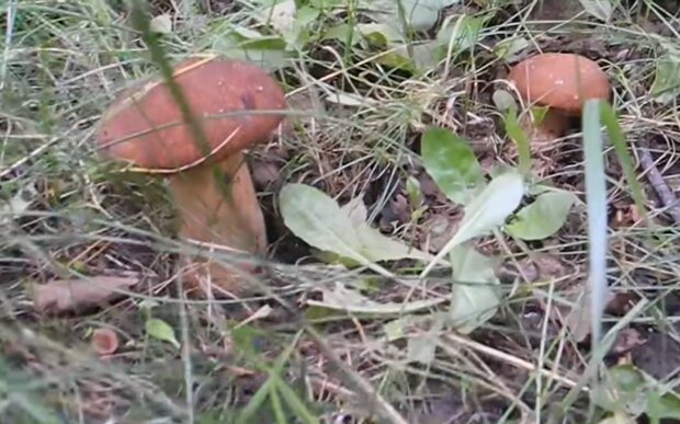 Білий гриб, скріншот: YouTube