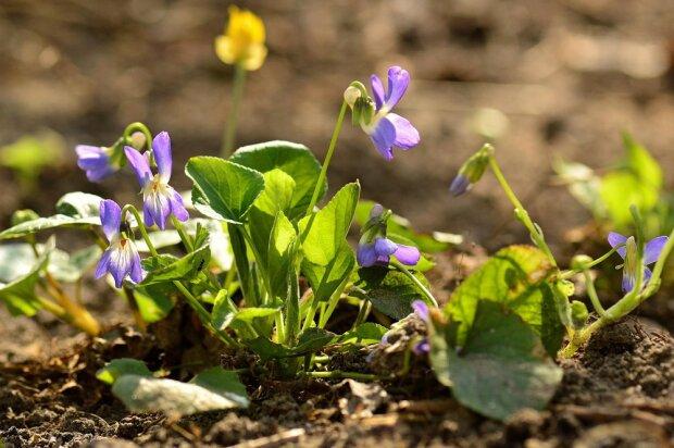 В Запорожье зацвели апрельские цветы: сказочные кадры новогодней аномалии