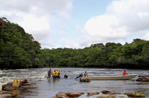 Моторошне 15-метрове чудовисько заблокувало русло річки: відео не для слабкодухих