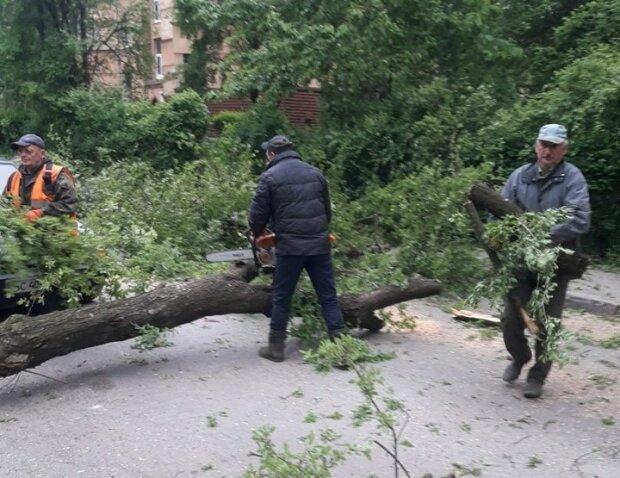 фото: Львовский городской совет