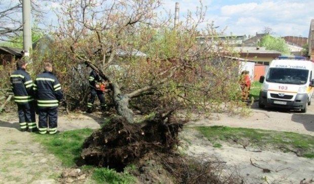 Смертельная поездка: пожилого велосипедиста убило деревом