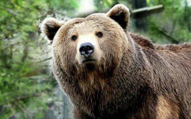 Вы его еще не видели?! Печальный медведопес прославился на весь мир