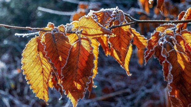Погода в Запорожье на 23 ноября, фото: Соцпортал