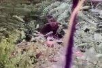 Донбасс, фото: youtube
