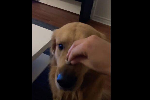 Собака з'їла кільце, скрін з відео