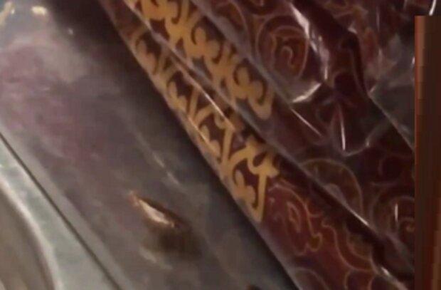 В українському кафе рій тарганів окупував випічку: зате булочки свіжі