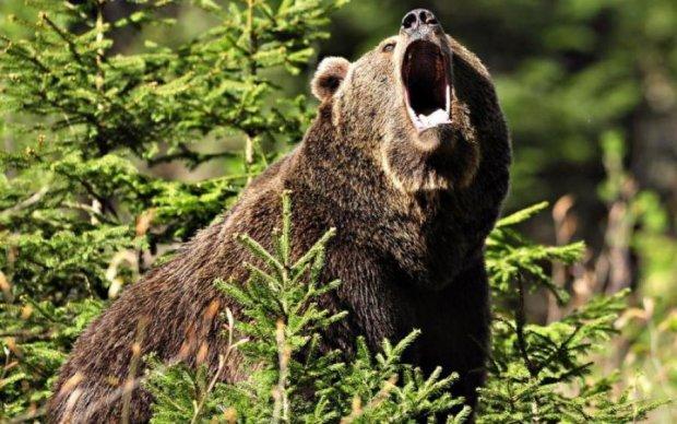 Пьяный россиянин угостил медведя сладким. И собой
