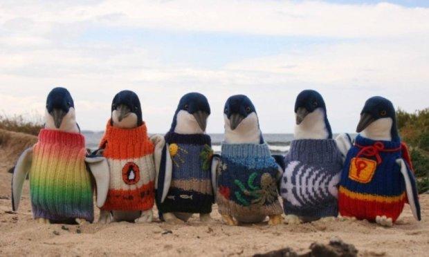 Найстаріший австралієць плете светри пінгвінам