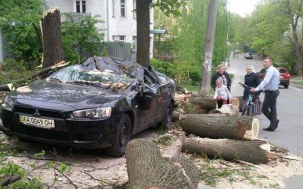 В Киеве дерево превратило Mitsubishi в металлолом
