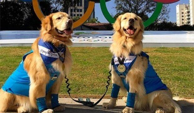 Instagram устроил Олимпиаду для животных