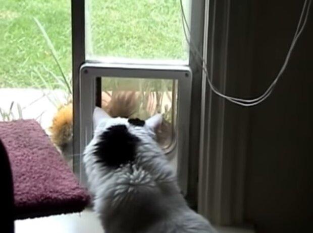 Білочці на котика чхати - безтурботність гризуна здивувала бувалих глядачів