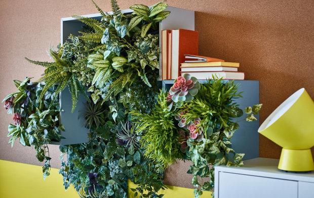 Топ 10 комнатных растений, которые высосут из вас все силы: энергетические вампиры