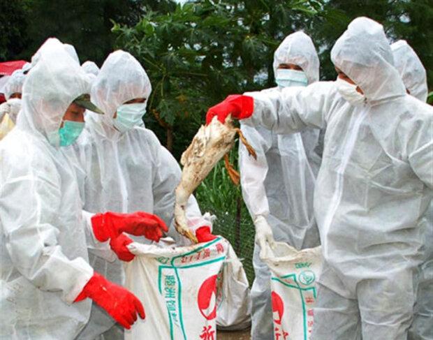 Пташиний грип: хвороба, симптоми, лікування, iran