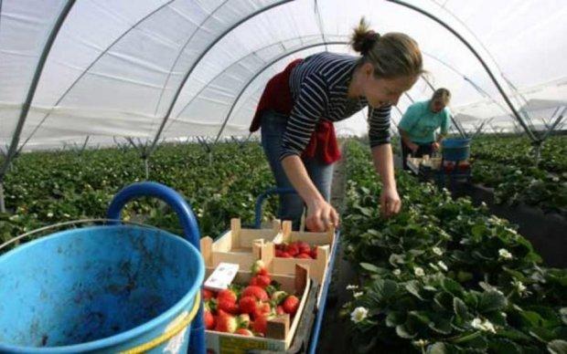 Українські робітники зацікавили європейську країну