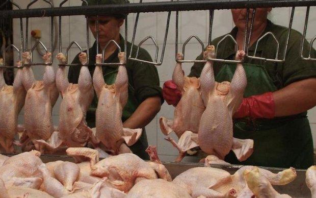 Ирак дал зеленый свет украинской птице