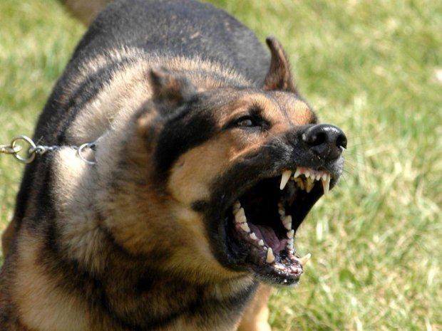 Жінка втрутилася у сварку з поліцейськими за допомогою собаки: загрожує три роки