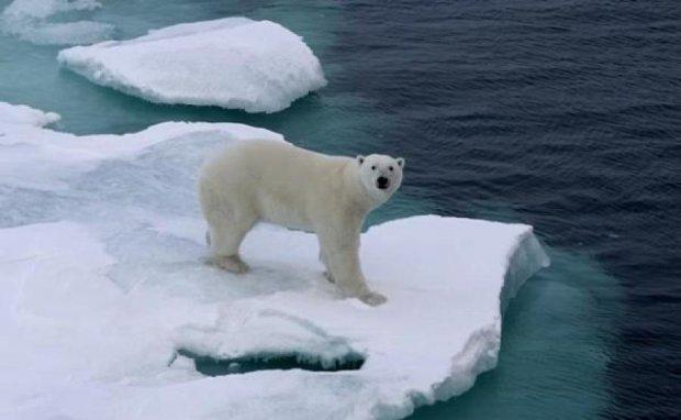 Вчені попередили про зникнення Арктики