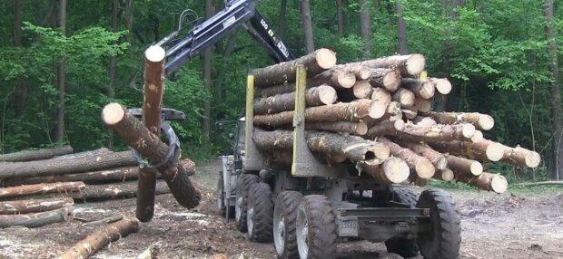 На Вінниччині винайшли спосіб протидіяти незаконній вирубці лісу: тепер на кожній колоді буде...
