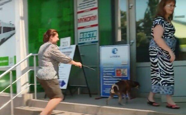 В Тернополе десятки собак устроились на работу - держись, шеф