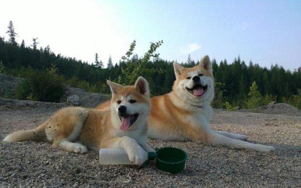 В России похоронили первую собаку-суицидницу