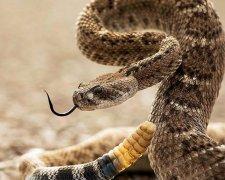 Гримуча змія