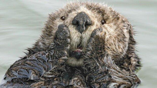 Лучшие кадры природы, фото: Comedy Wildlife Photography Awards