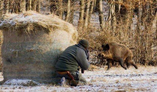 На Рівненщині виявили свинячу чуму