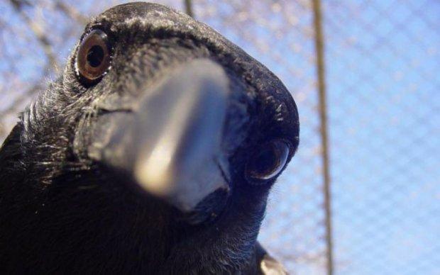 Птахи показали майстер-клас з виготовлення інструментів: відео