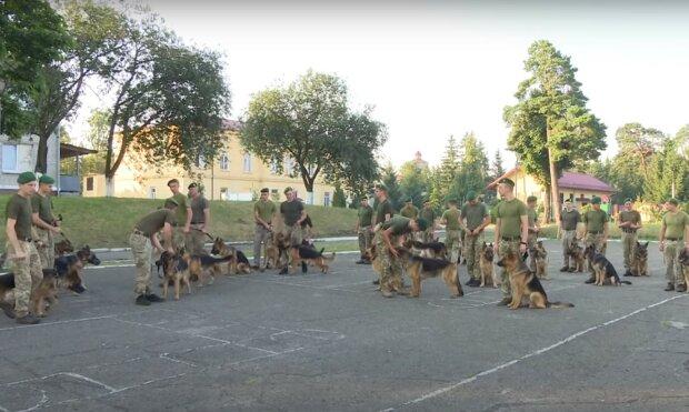 служебные псы, скриншот из видео