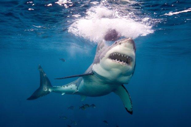 Акулы растерзали молодую красавицу на глазах у родных: фото