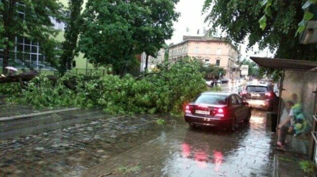 Семеро львів'ян викинули автівки після пекельної бурі - прощавайте, крихітки