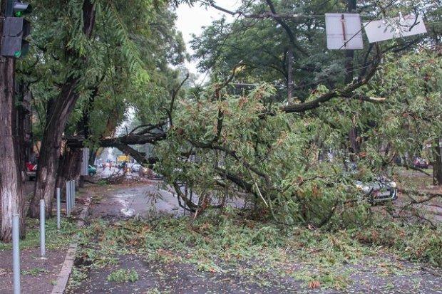 Под Полтавой на 6-летнего малыша рухнуло дерево: врачи собирают по кусочкам