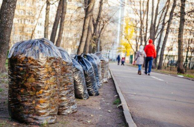 Український геній готує революційне ноу-хау: це врятує від вирубки ліси по всьому світу