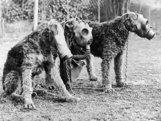 Собаки во время войны, фото из свободных источников